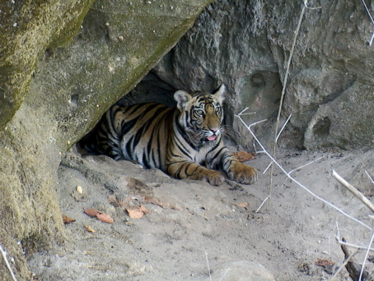 Gallery of photos taken by Digvijaya Singh in Bandhavgarh National Park