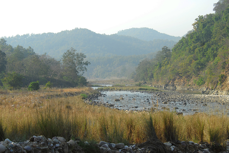 Photos taken by Digvijaya Singh in Corbett National Park