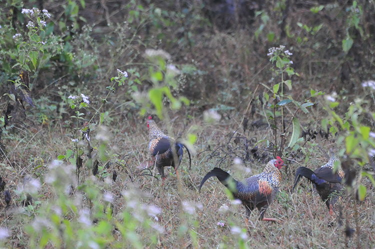 Gallery of photos taken by Digvijaya Singh in Kabini National Park