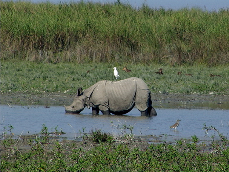 Gallery of photos taken by Digvijaya Singh in Kaziranga National Park