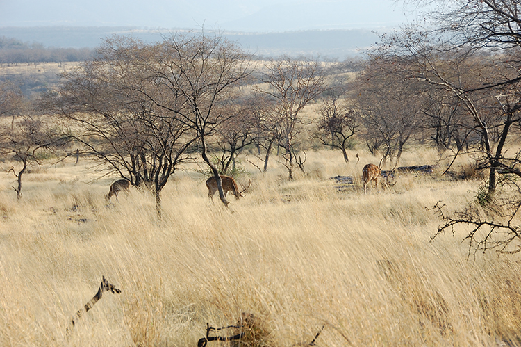 Gallery of photos taken by Digvijaya Singh in Ranthambore National Park