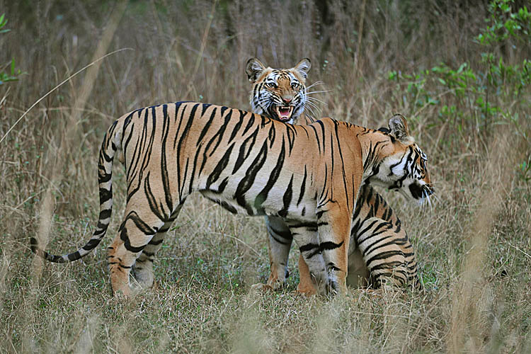 Gallery of photos taken by Digvijaya Singh in Tadoba National Park